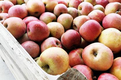 Cal Modest | Agroturisme