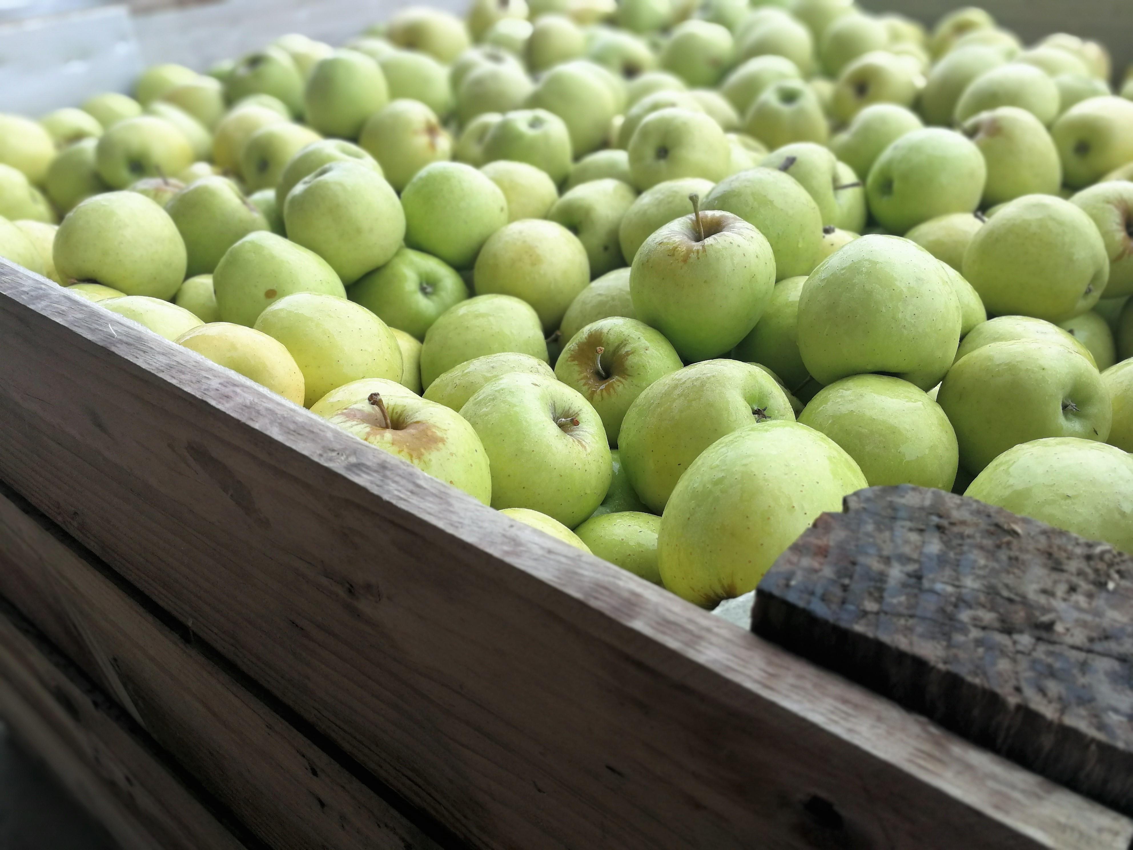 Ref. 1200 unidades. Manzanas Golden (ECO reconversión)