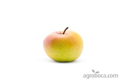 Manzanas ecológicas Verde Doncella