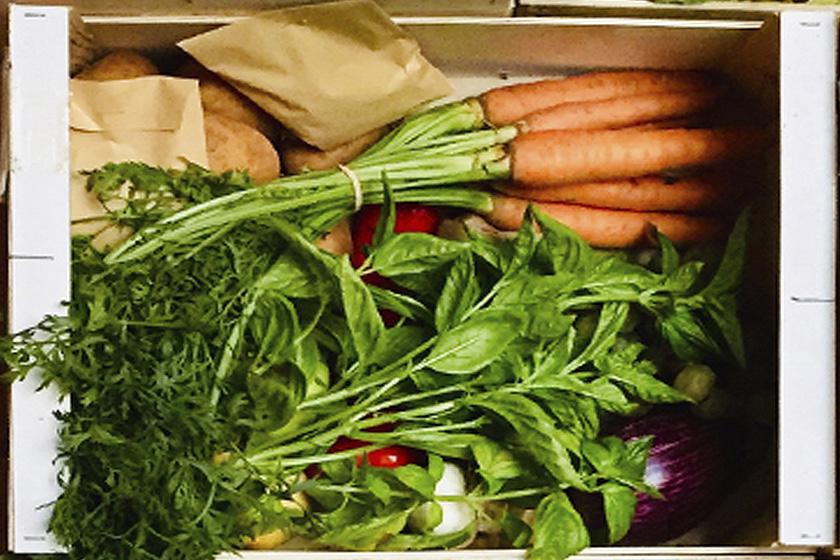 Cesta hortalizas y frutas ecológicas (10 KG)
