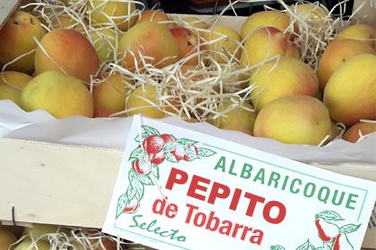 Albaricoques al mayor - Pepito