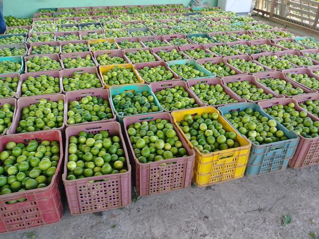 Persian lemons
