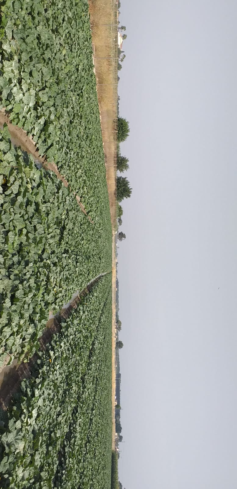 produciones agricolas galvez