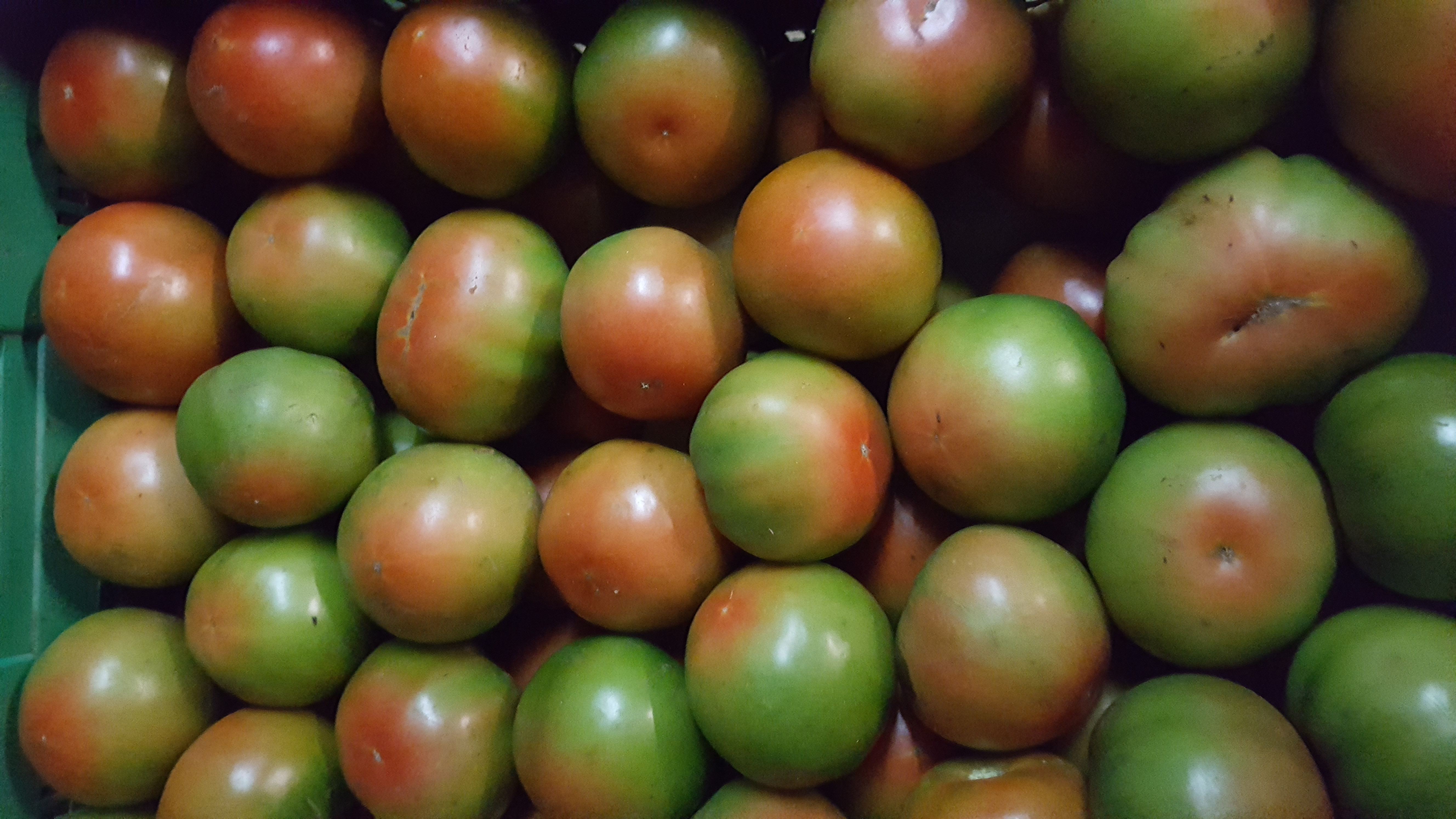 2 kilos de Tomate híbrido para ensalada