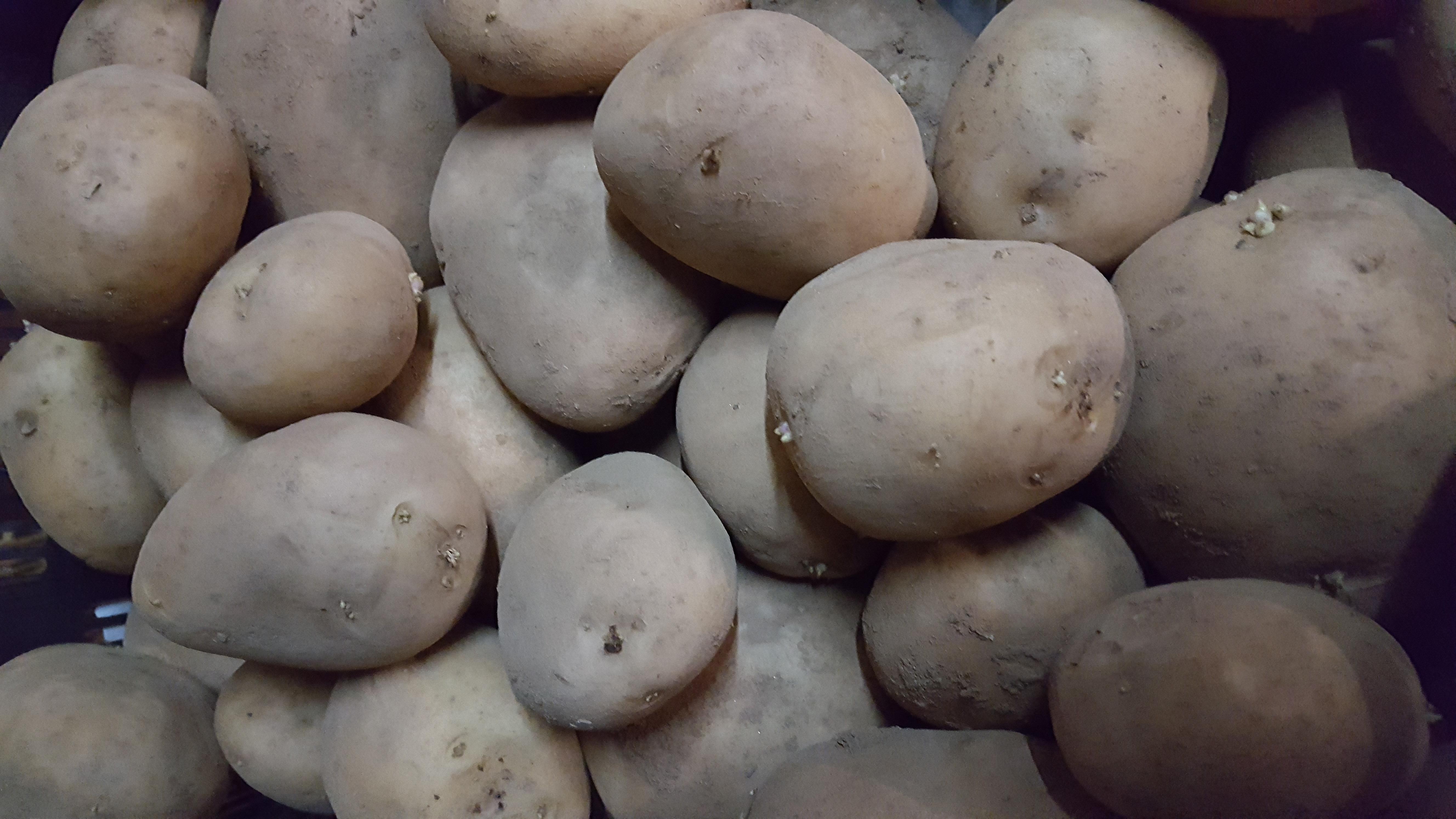 5 kilos patata kennebec