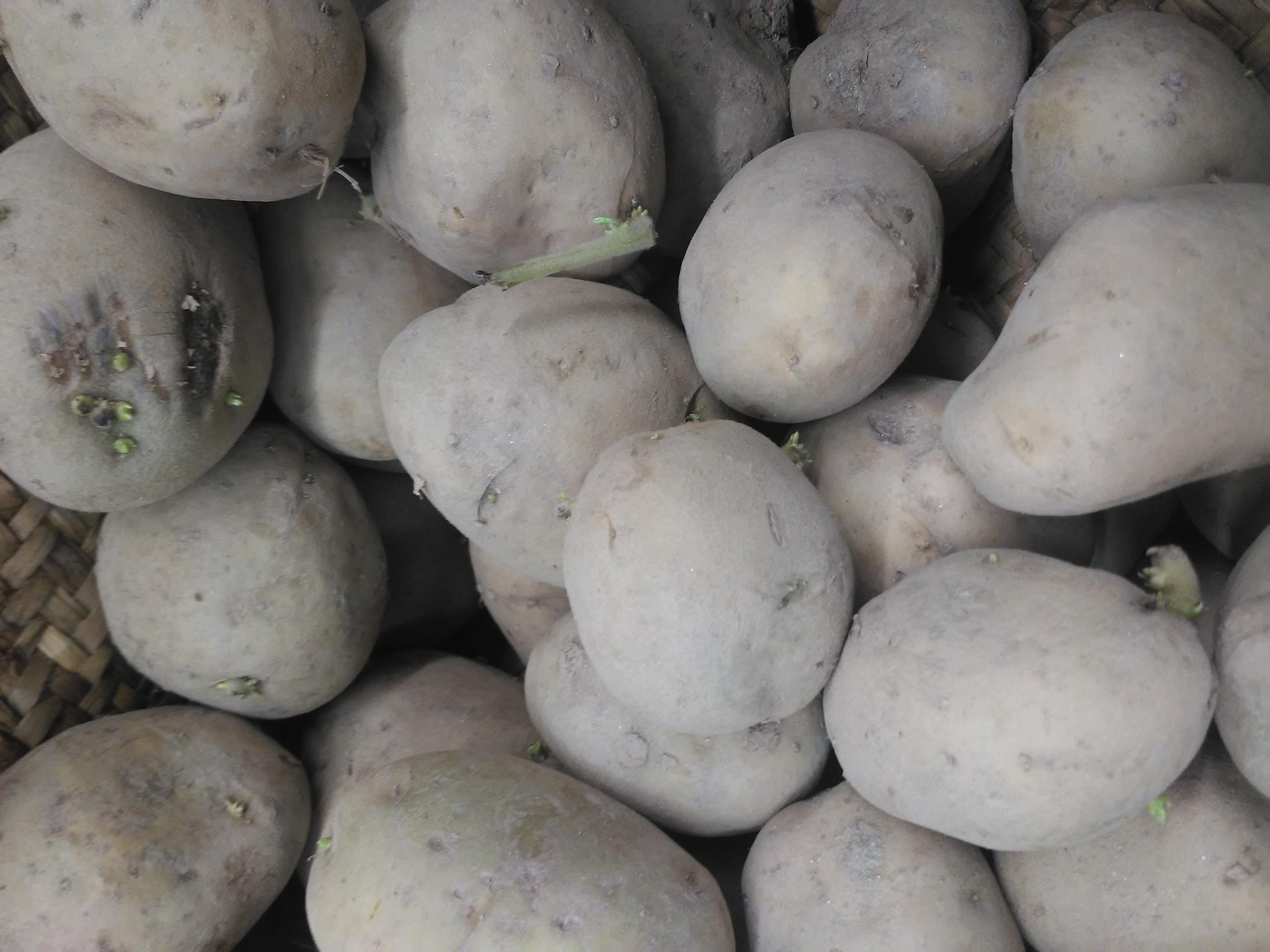 Patata blanca gallega