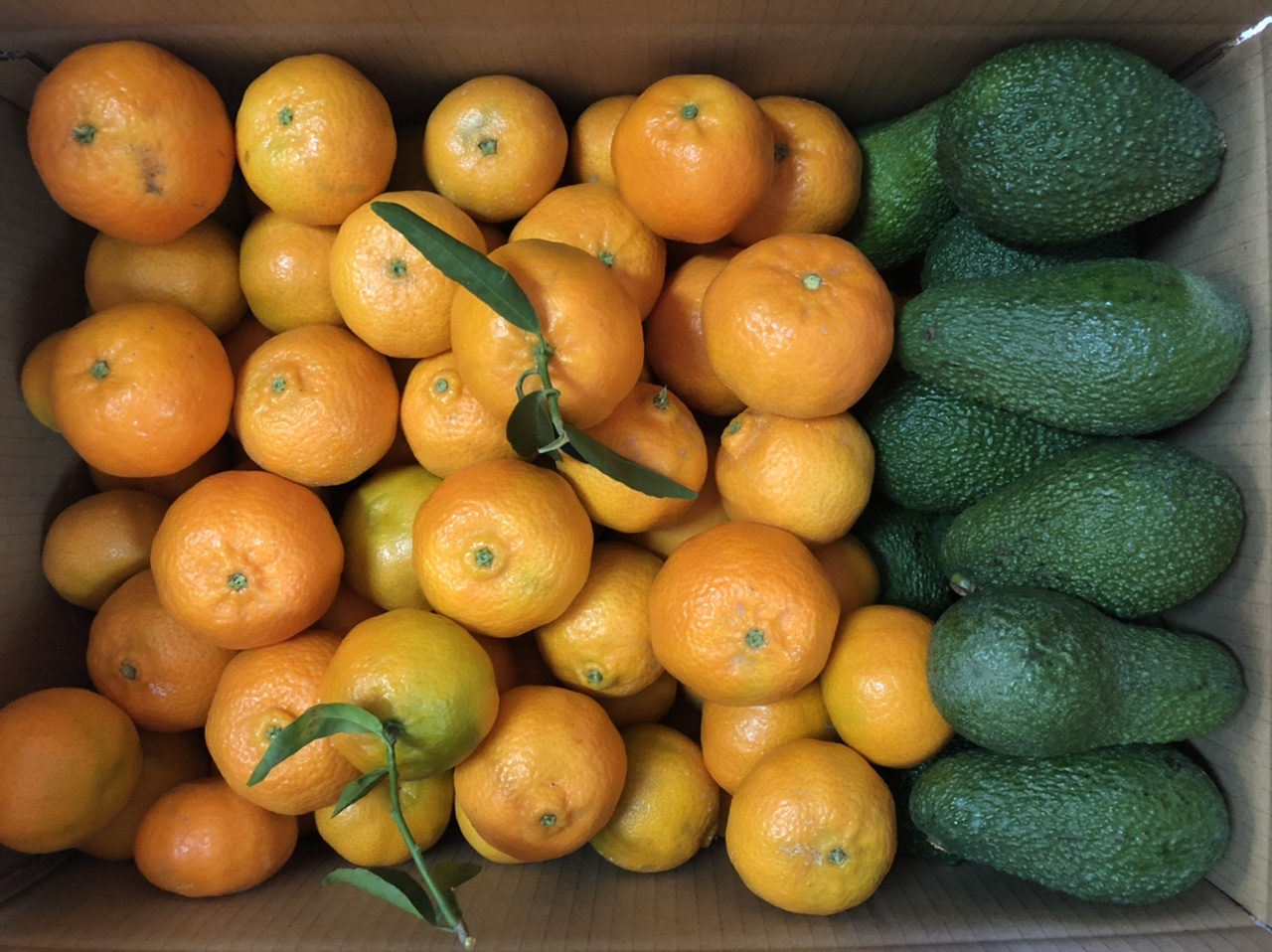 caja mixta mandarinas/aguacates