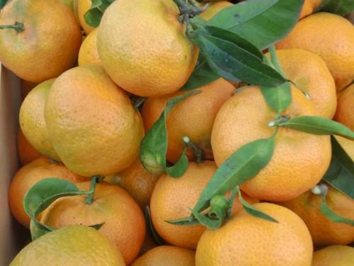 Mandarina de Almenara