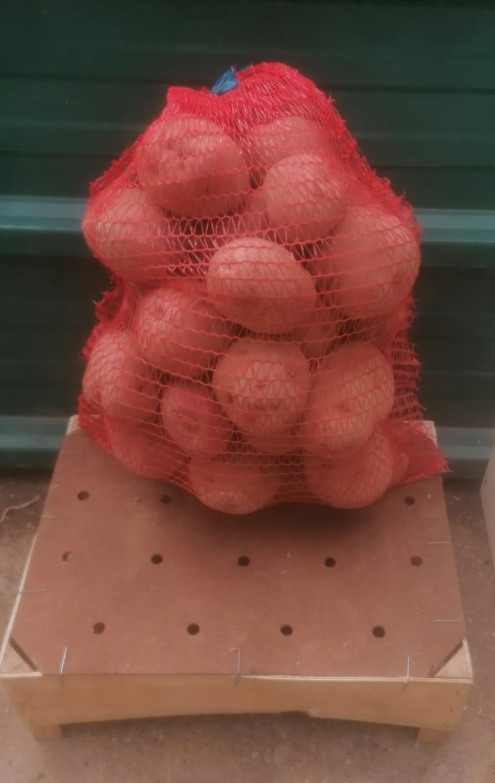 Patata red pontiac casera