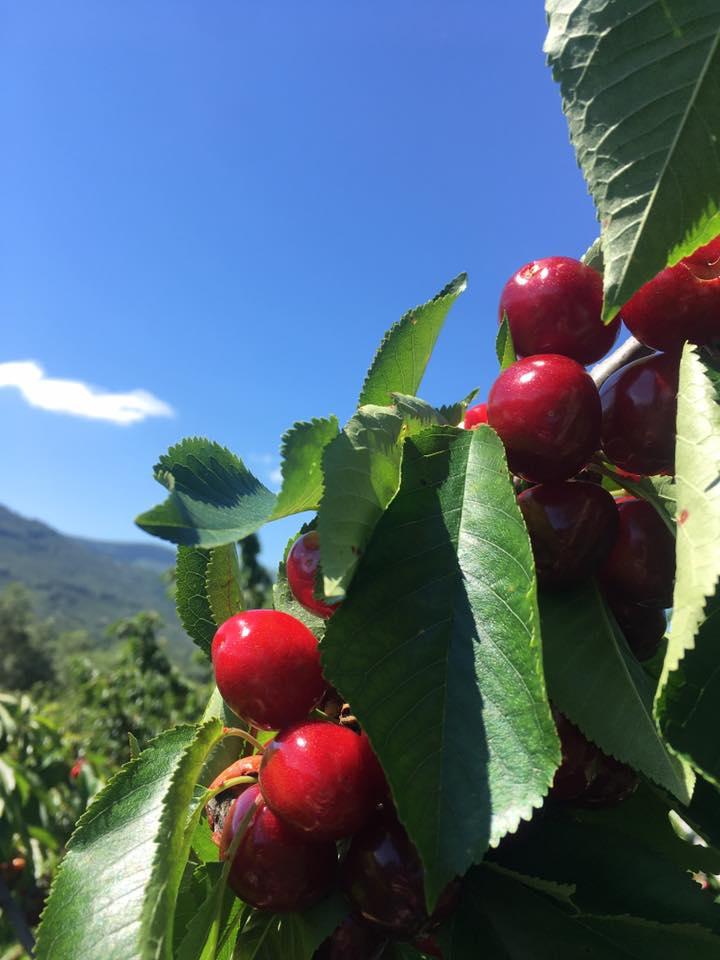 Cerezas Artesanas del Valle del Jerte