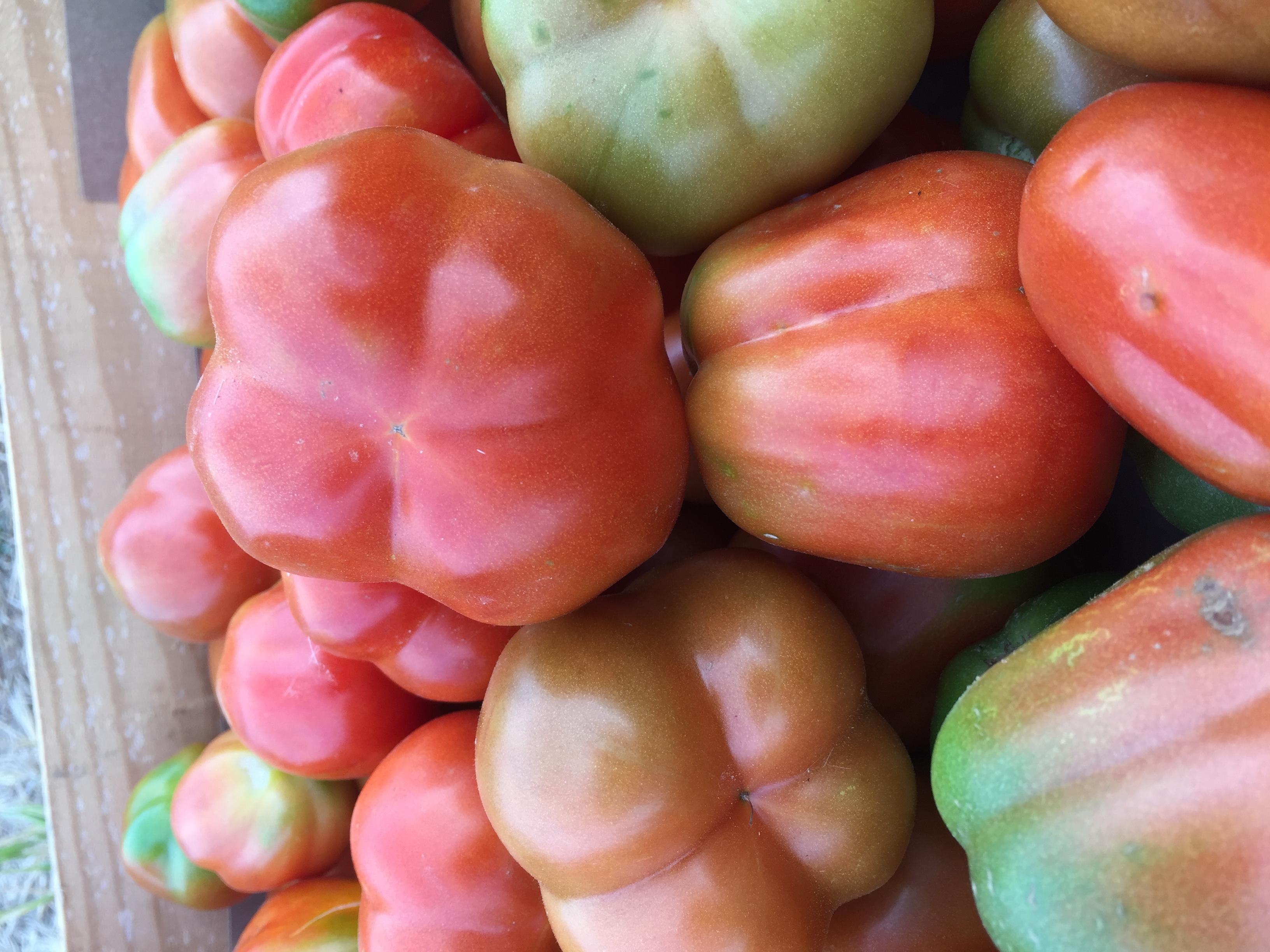 Tomate  Pera Empordà