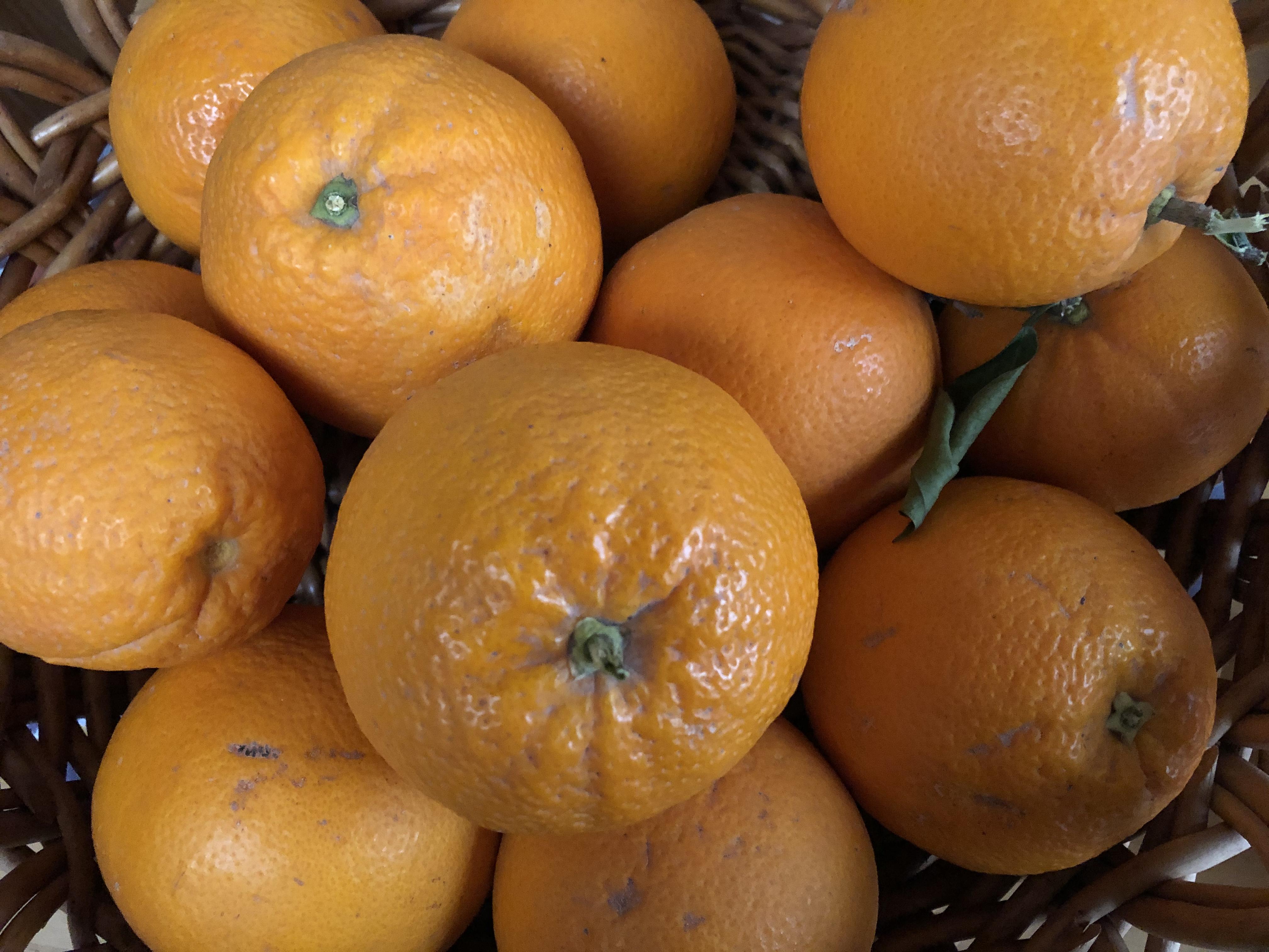 Naranja de Castellón