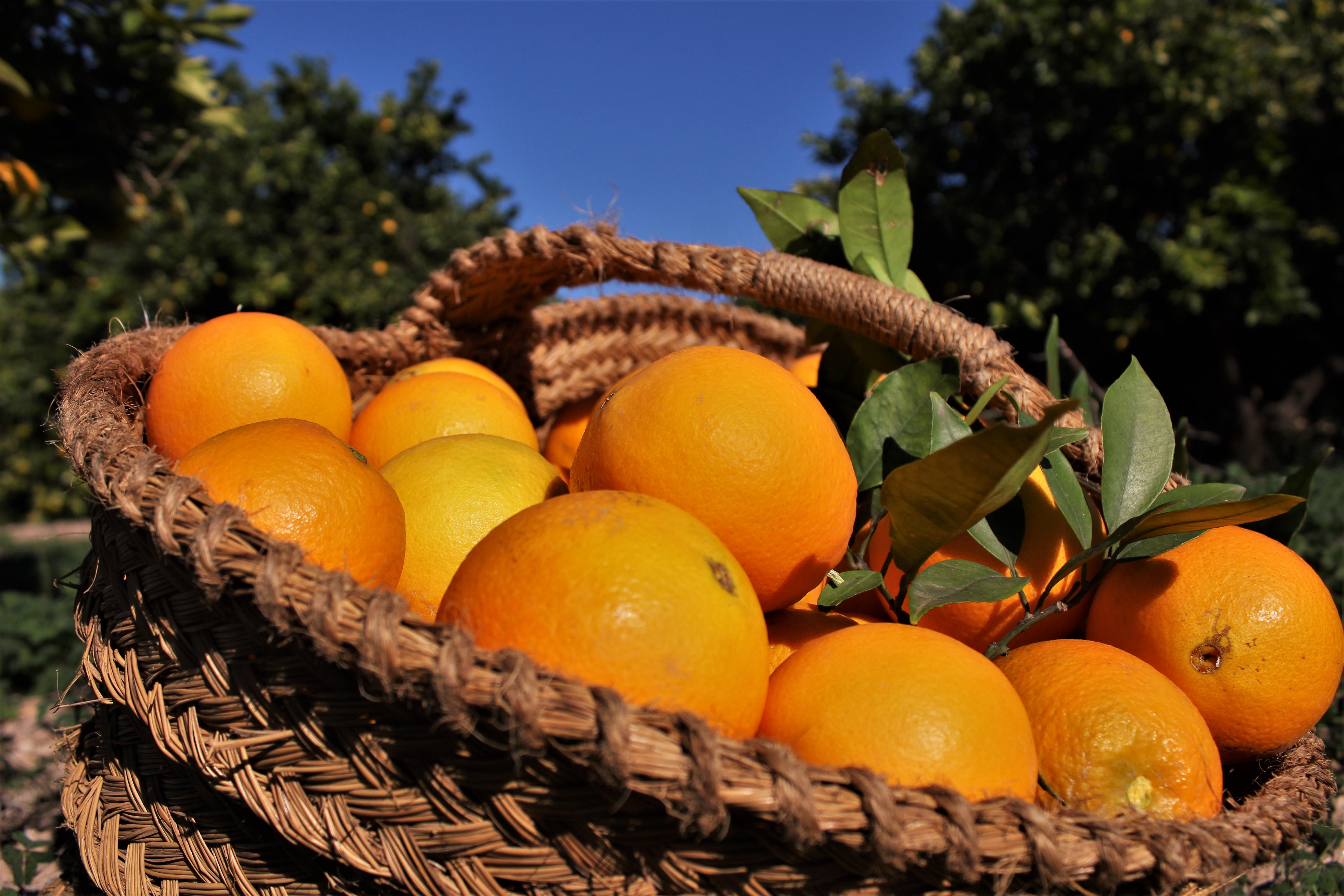 Taronjes de València