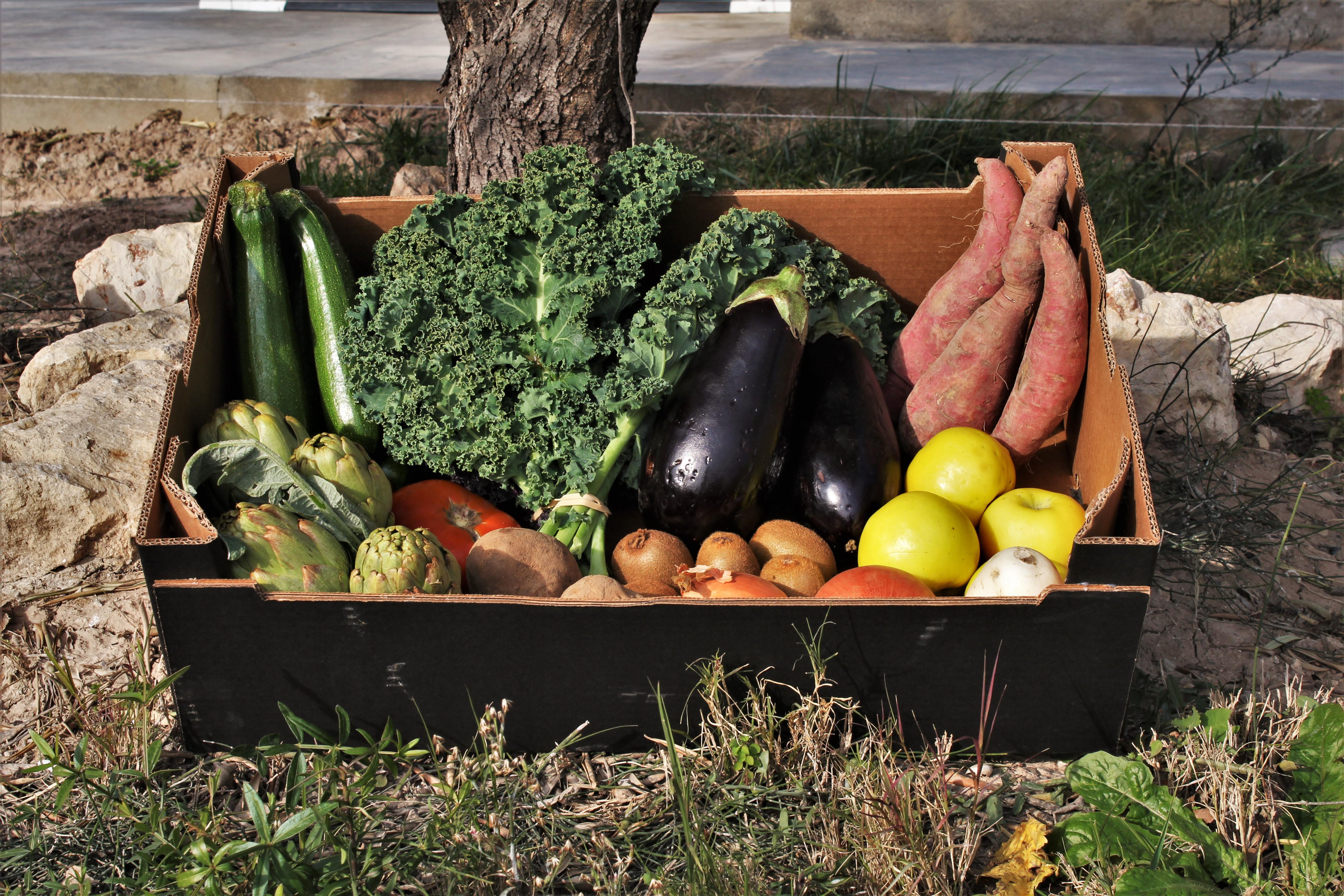 Cesta de fruta y verdura 10kg