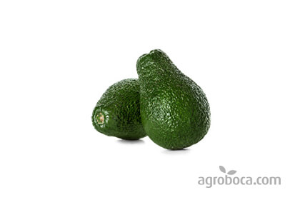 Aguacate ecológico a granel