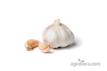 Garlic Gourmet Quality