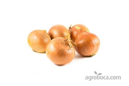 BIO Onion