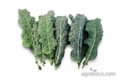 Col Kale ecològica