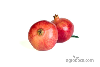 Mollar pomegranate