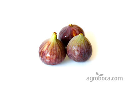 Figues seques.