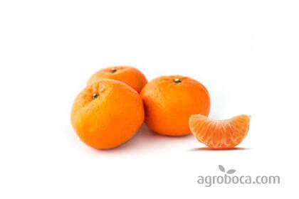 Mandarinas Ortanique ECO  - Caja 9kg