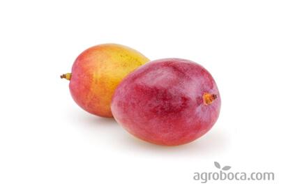 Mango - Caja de 4kg