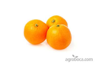 Naranjas Navelina ECO - caja 9kg