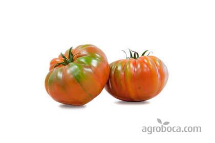 Tomates ensalada ecológicos