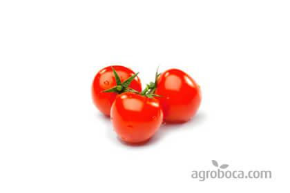 tomate zaragozano