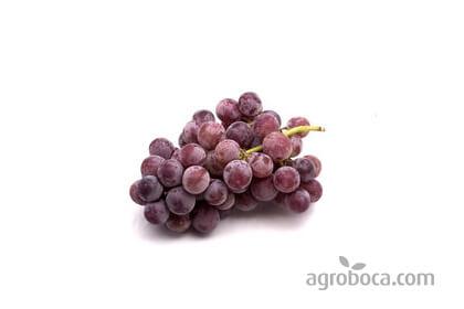 Uvas de mesa Red Globe (20 KG)